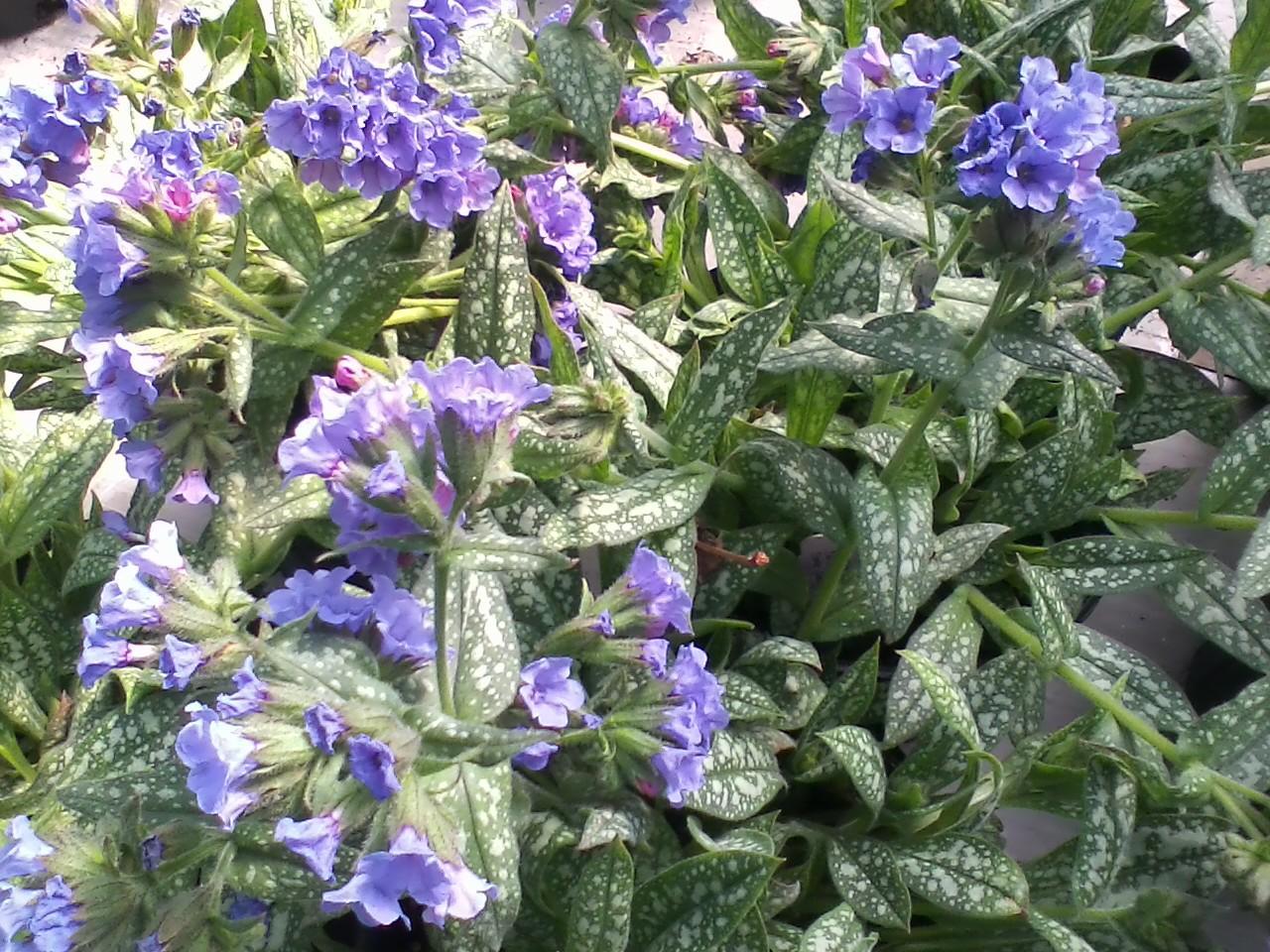 Perennials Canton Road Garden Center Akron Ohio