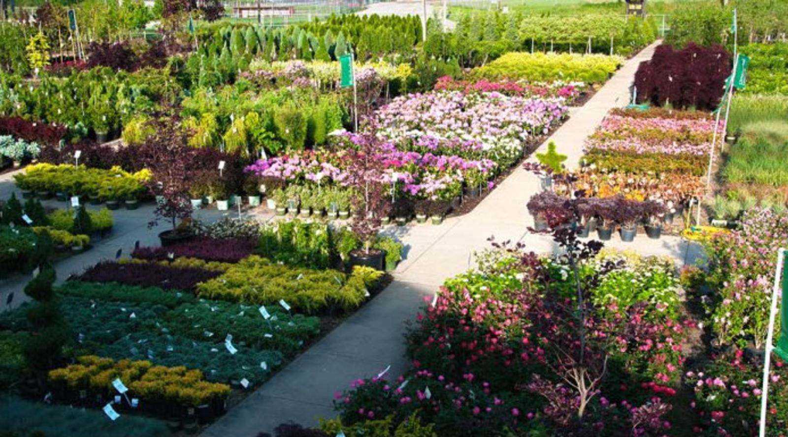 Peti Garden Center Strongsville Garden Ftempo